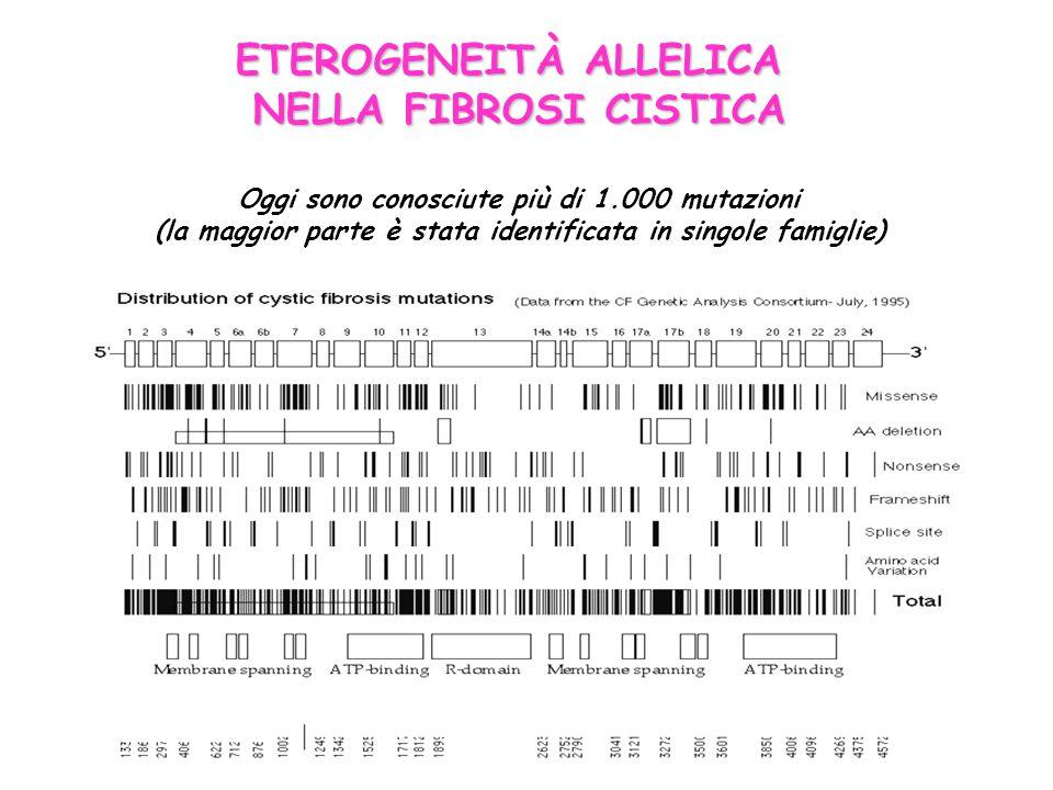 ETEROGENEITÀ ALLELICA NELLA FIBROSI CISTICA Oggi sono conosciute più di 1.000 mutazioni (la maggior parte è stata identificata in singole famiglie)