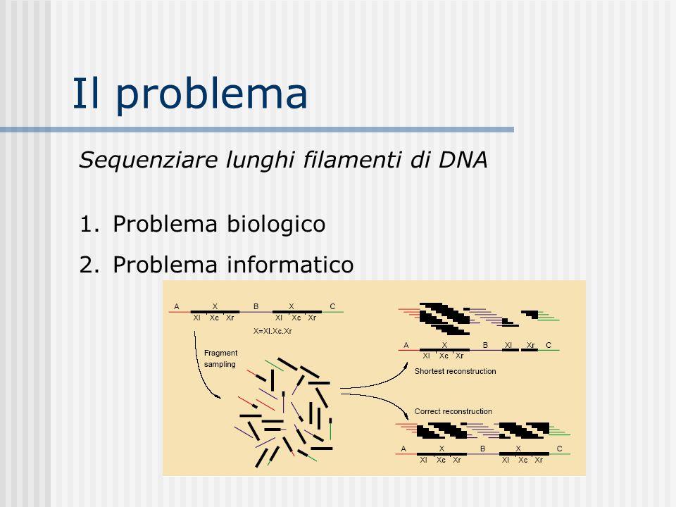 Il problema Sequenziare lunghi filamenti di DNA 1.Problema biologico 2.Problema informatico