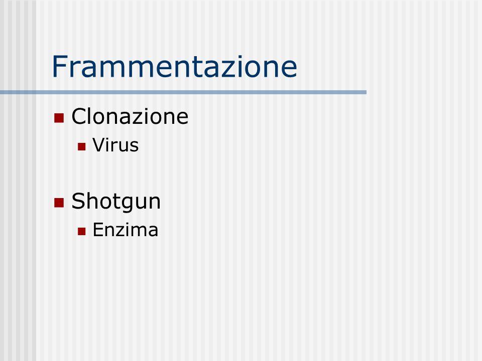 Frammentazione Clonazione Virus Shotgun Enzima