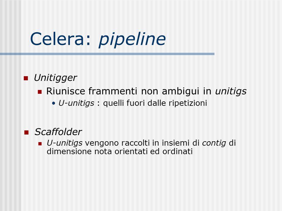 Celera: pipeline Unitigger Riunisce frammenti non ambigui in unitigs U-unitigs : quelli fuori dalle ripetizioni Scaffolder U-unitigs vengono raccolti