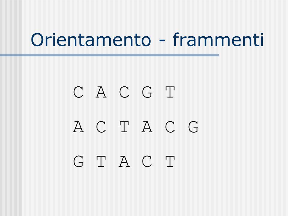 Orientamento - frammenti C A C G T A C T A C G G T A C T