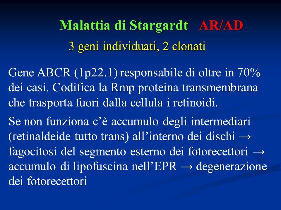 Malattia di Stargardt Se non funziona c'è accumulo degli intermediari (retinaldeide tutto trans) all'interno dei dischi → fagocitosi del segmento este
