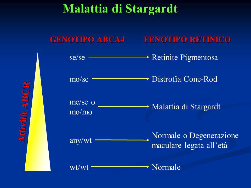 Malattia di Stargardt GENOTIPO ABCA4 FENOTIPO RETINICO se/se mo/se me/se o mo/mo any/wt wt/wt Retinite Pigmentosa Distrofia Cone-Rod Malattia di Starg