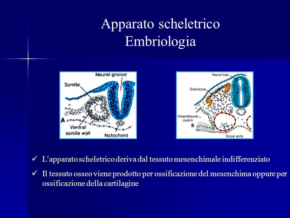 Displasia toracica asfissiante (Snd.