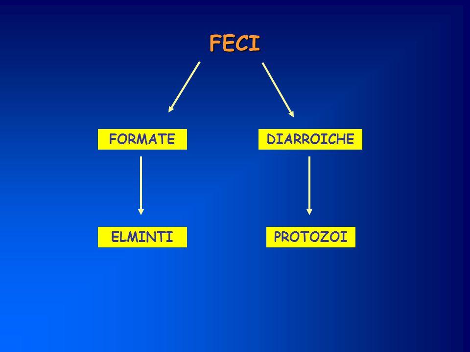 Parassiti intestinali protozoielminti Due stadi morfologici trofozoitacisti Popolano acque e terreni Contagio fecale-orale UovaLarve Contagio fecale-orale transcutaneo Due stadi morfologici