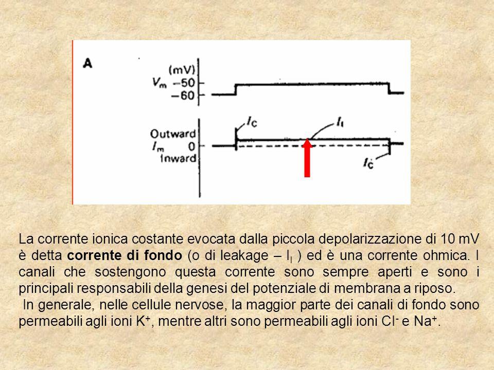 La corrente ionica costante evocata dalla piccola depolarizzazione di 10 mV è detta corrente di fondo (o di leakage – I l ) ed è una corrente ohmica.