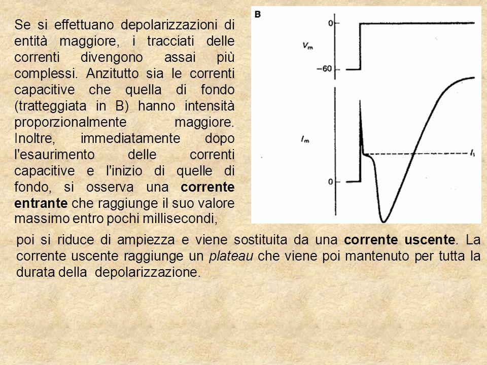 Se si effettuano depolarizzazioni di entità maggiore, i tracciati delle correnti divengono assai più complessi.