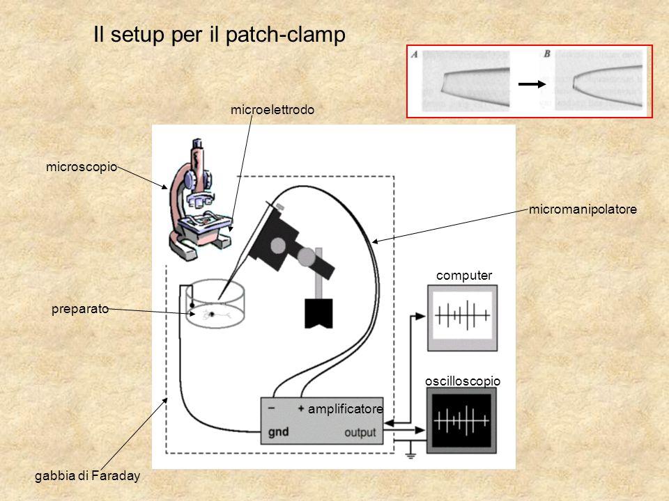 Il setup per il patch-clamp computer oscilloscopio amplificatore microelettrodo micromanipolatore preparato microscopio gabbia di Faraday