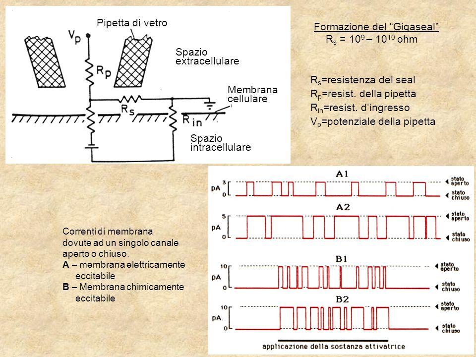 Registrazione di una corrente elettrica che fluisce attraverso un singolo canale ionico Elettrodo di registrazione: micropipetta di vetro  ~10 -6 m Resistenza della saldatura: >1 G  Quando un singolo canale si apre, gli ioni si muoveranno attraverso il canale come una corrente elettrica Con un opportuno equipaggiamento elettronico e opportune condizioni sperimentali è possibile misurare questa corrente microscopica Amplificatore