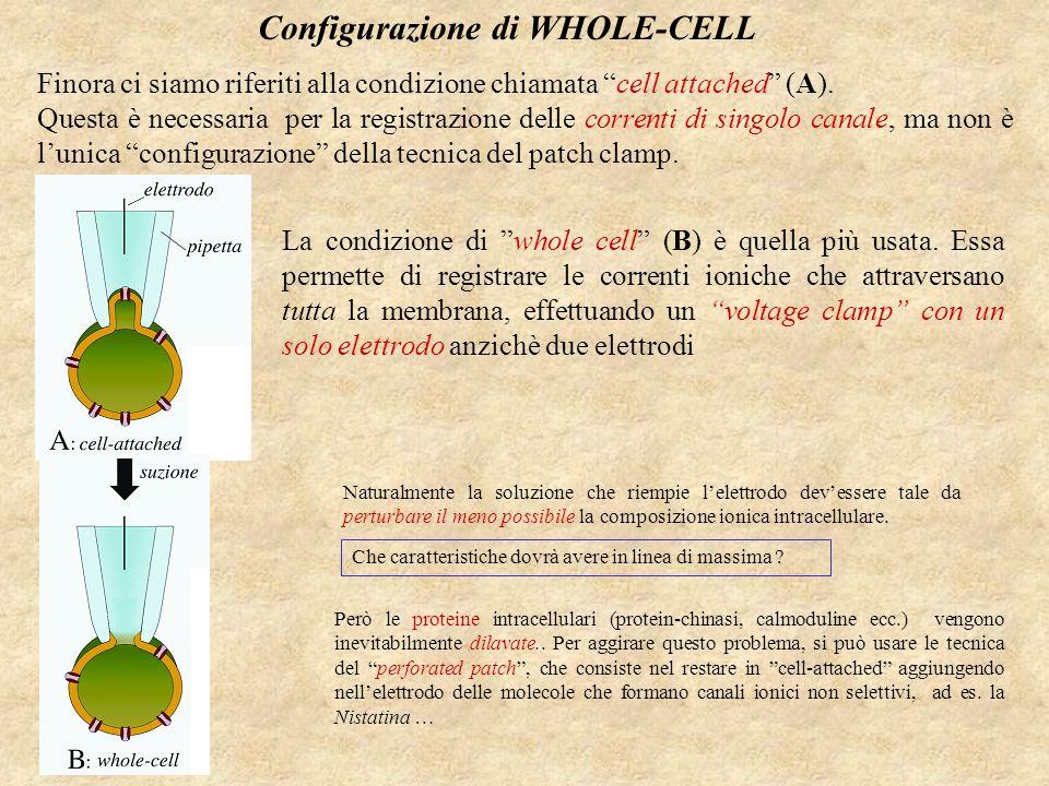 Differenti tipi di Patch Micropipetta Apertura 0.5-1  m Bassa resistenza Saldatura (50 M  Membrana cellulare Corrente di leakage Corrente di membrana Suzione Gigaseal (>1 G  ) Una breve suzione rompe il patch di membrana Il ponte citoplasmatico collassa Trazione L'esposizione all'aria rompe la vescicola Trazione in un mezzo a basso Ca 2+ Resistenza dell'elettrodo 2-10 M  Whole-cell patch clamp: Simile alla tecnica di derivazione intracellulare.