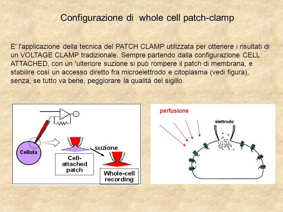 Configurazione di whole cell patch-clamp perfusione elettrodo Ba elettrodo Ba E l applicazione della tecnica del PATCH CLAMP utilizzata per ottenere i risultati di un VOLTAGE CLAMP tradizionale.