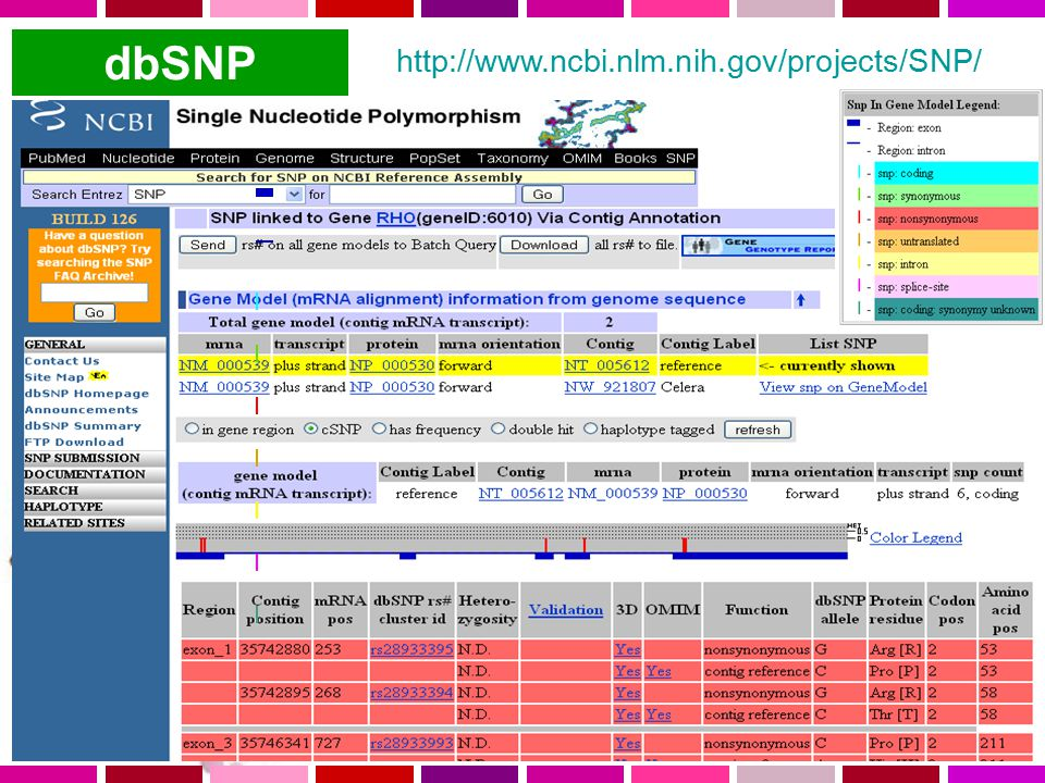 dbSNP http://www.ncbi.nlm.nih.gov/projects/SNP/