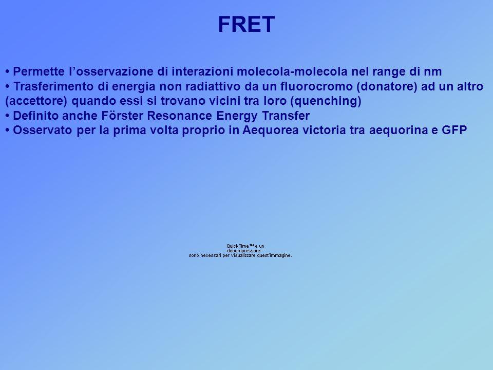 FRET Permette l'osservazione di interazioni molecola-molecola nel range di nm Trasferimento di energia non radiattivo da un fluorocromo (donatore) ad un altro (accettore) quando essi si trovano vicini tra loro (quenching) Definito anche Förster Resonance Energy Transfer Osservato per la prima volta proprio in Aequorea victoria tra aequorina e GFP