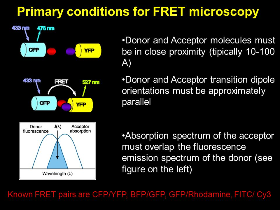 Primary conditions for FRET microscopy Donor and Acceptor molecules must be in close proximity (tipically 10-100 A) Donor and Acceptor transition dipo