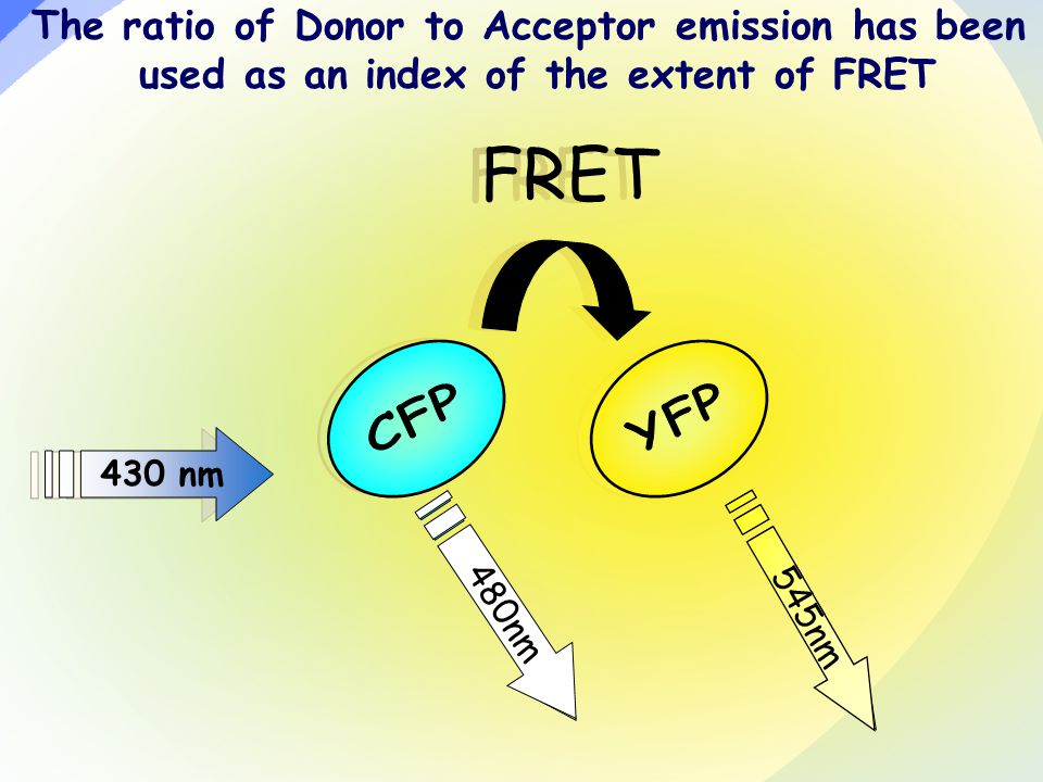 430 nm FRET 430 nm FRET The ratio of Donor to Acceptor emission has been used as an index of the extent of FRET 480nm 545nm