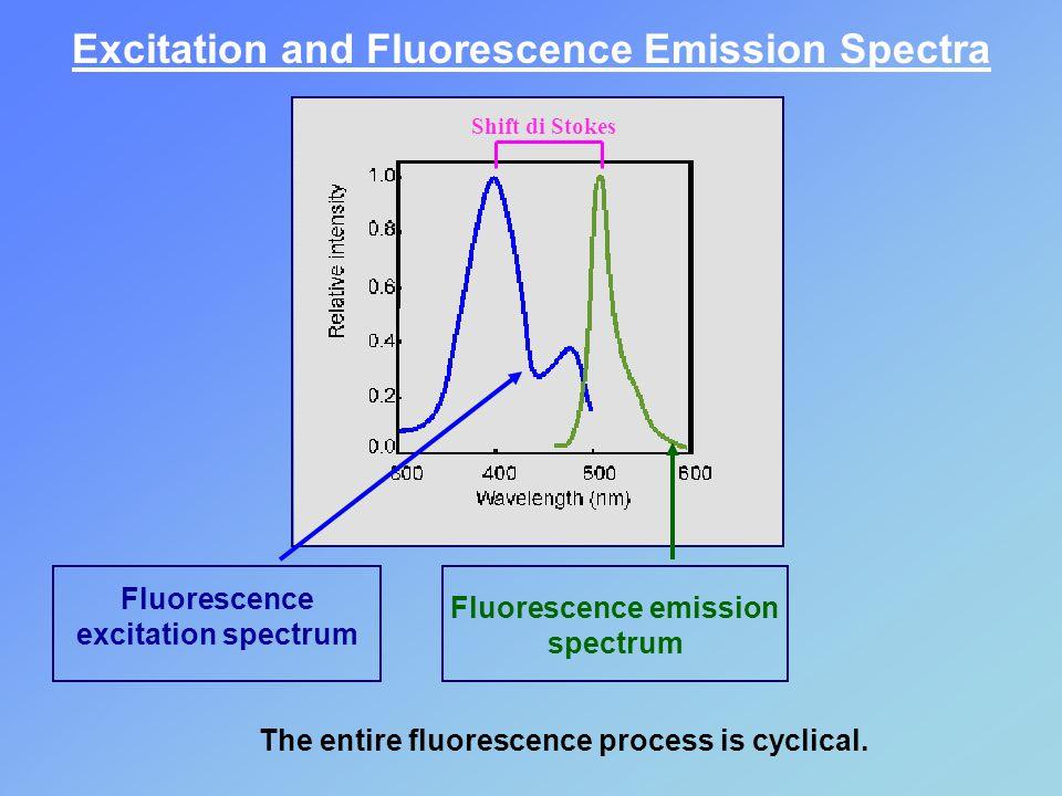 Fluorescence excitation spectrum Fluorescence emission spectrum Excitation and Fluorescence Emission Spectra The entire fluorescence process is cyclical.
