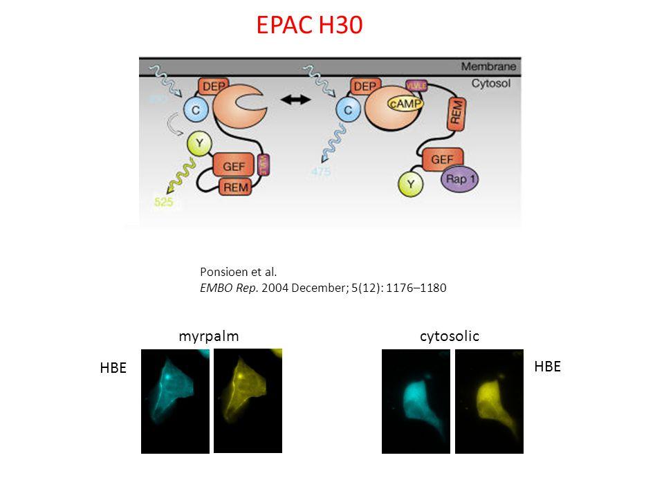 EPAC H30 Ponsioen et al. EMBO Rep. 2004 December; 5(12): 1176–1180 HBE myrpalm cytosolic HBE