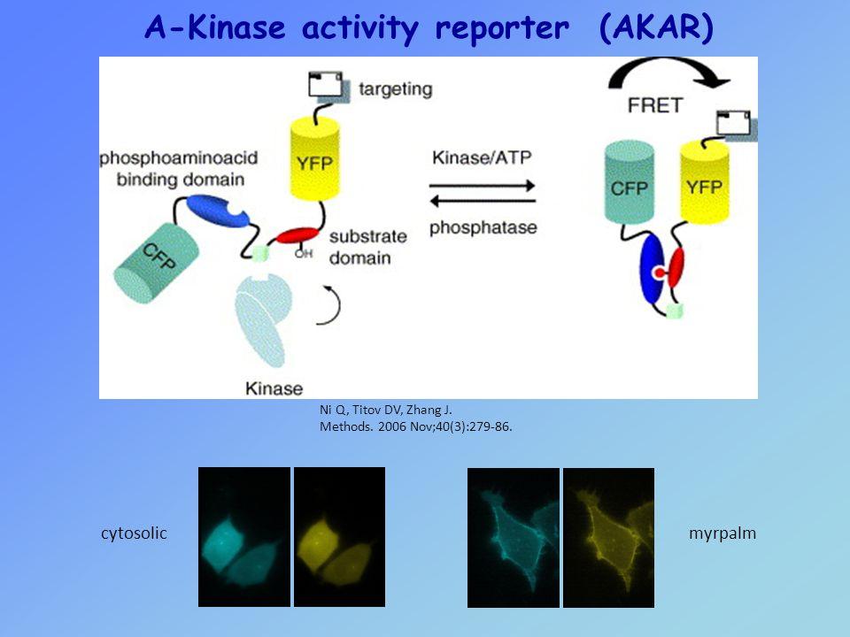 cytosolicmyrpalm A-Kinase activity reporter (AKAR) Ni Q, Titov DV, Zhang J.