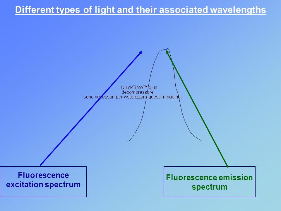Different types of light and their associated wavelengths Fluorescence excitation spectrum Fluorescence emission spectrum