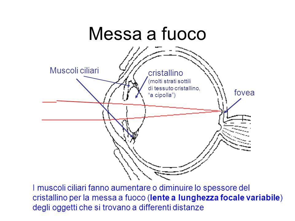 Occhio miope – ipermetrope e correzioni necessarie