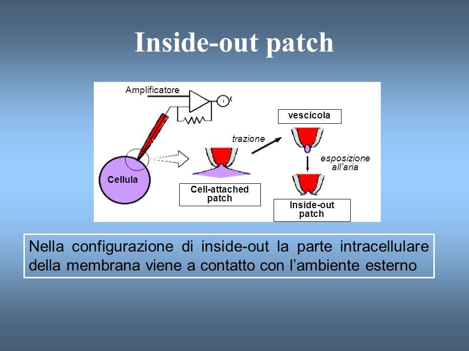 Effetto delle Tossine Batteriche sulla Trasduzione del Segnale Tossina del colera Vibrio cholerae Tossina della pertosse Bordetella pertussis ADP-ribosilazione di un residuo Arg di G s -  ; attività GTPasica abolita; G s -  bloccata nello stato attivo monomerico ADP-ribosilazione di un residuo Cys di G i -  ; nessuno scambio di GTP; G i -  bloccata nello stato inattivo eterotrimerico