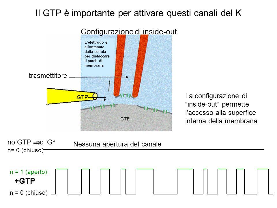 Certi canali K + sono effettori di G i/o + neurotr.
