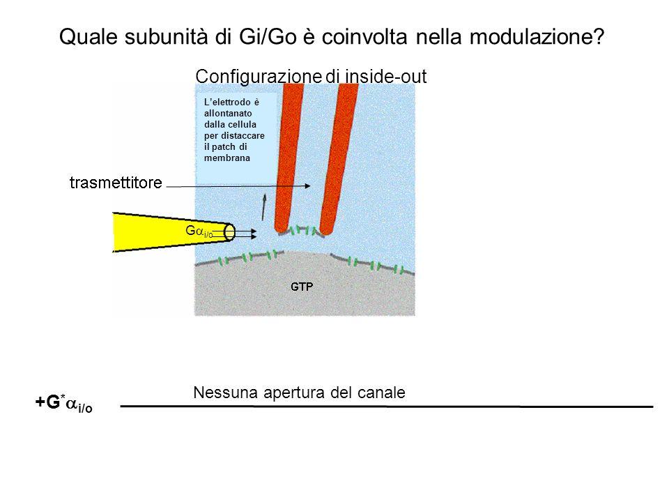 Attivazione canali GIRK in Inside-out patch mediante GTP o GTP  S