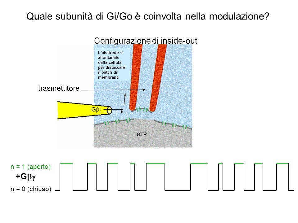 G  i/o +G *  i/o Nessuna apertura del canale L'elettrodo è allontanato dalla cellula per distaccare il patch di membrana Configurazione di inside-out Quale subunità di Gi/Go è coinvolta nella modulazione?