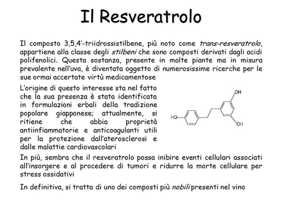 Il composto 3,5,4'-triidrossistilbene, più noto come trans-resveratrolo, appartiene alla classe degli stilbeni che sono composti derivati dagli acidi polifenolici.