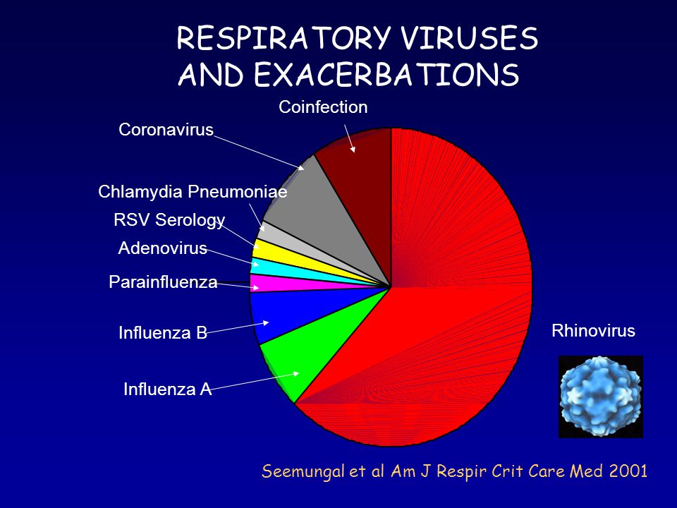 RSV (PCR) IN STABLE COPD AND AT EXACERBATION Seemungal et al Am J Respir Crit Care Med 2001 EXACERBATIONS RSV found in 26% of exacerbations Detection of RSV not related to exacerbation parameters STABLE RSV found in 24% of stable samples