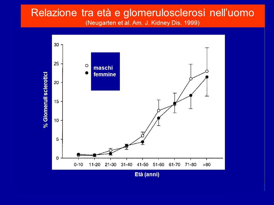 Età (anni) % Glomeruli sclerotici maschi femmine Relazione tra età e glomerulosclerosi nell'uomo (Neugarten et al. Am. J. Kidney Dis. 1999)