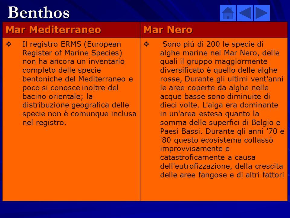 Nel Mar Mediterraneo:Nel Mar Nero:  La poca produzione unita ad uno sviluppo limitato ai livelli più alti della catena alimentare, inclusa la bassa p