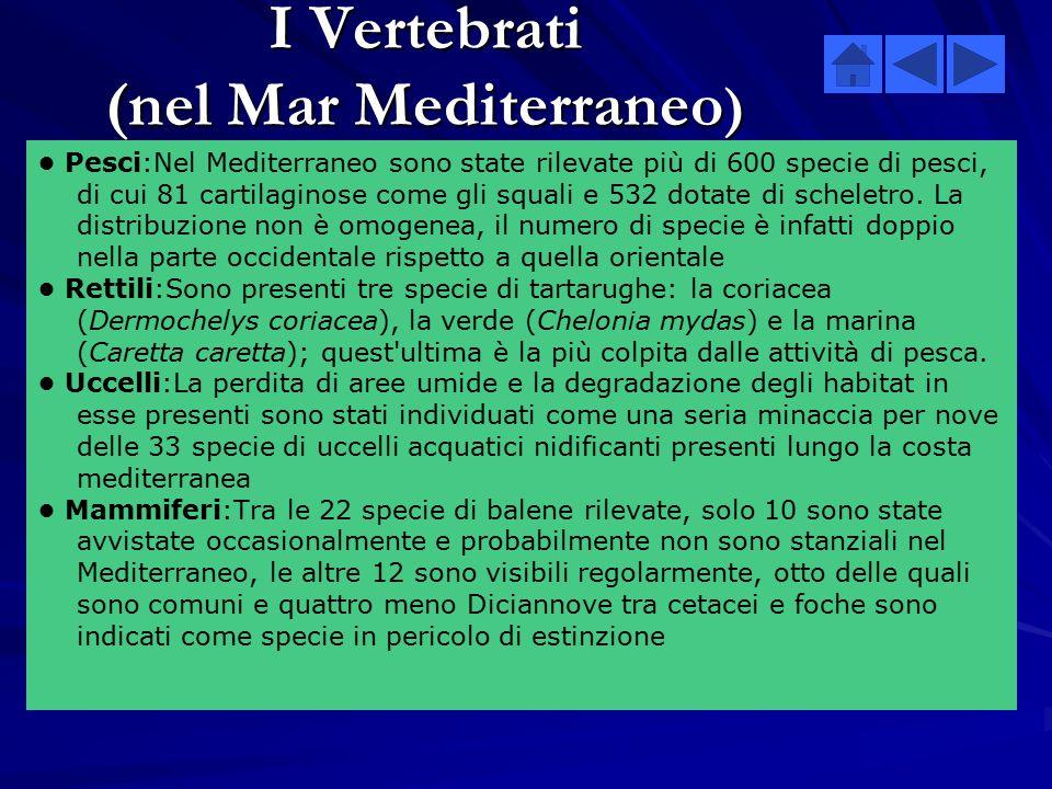 Benthos Mar Mediterraneo Mar Nero  Il registro ERMS (European Register of Marine Species) non ha ancora un inventario completo delle specie bentonich