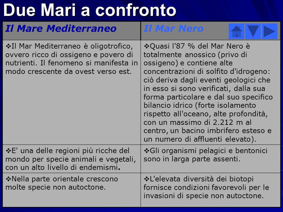 Enciclopedia comparata Mar Mediterraneo/Mar Nero Due Mari a confronto Dati relativi a Mar Mediterraneo Dati relativi al Mar Nero Morfologia a confront