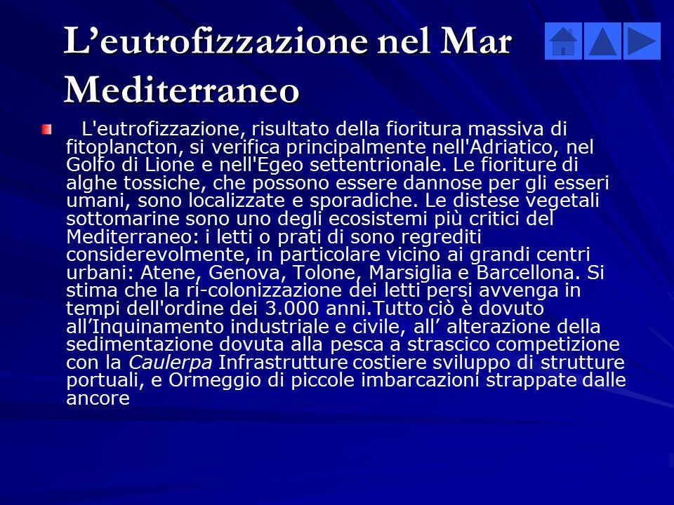 Alcune cause che provocano cambiamenti alle biodiversità Nel Mar Mediterraneo: Nel Mar Nero: 1.L'eutrofizzazioneL'eutrofizzazione 2.La contaminazione