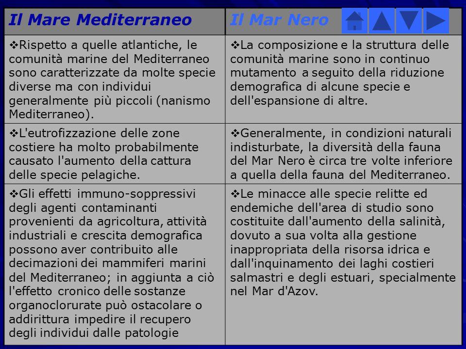 Due Mari a confronto Il Mare MediterraneoIl Mar Nero  Il Mar Mediterraneo è oligotrofico, ovvero ricco di ossigeno e povero di nutrienti. Il fenomeno