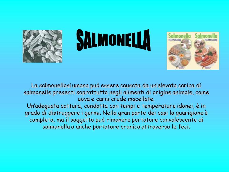 La salmonellosi umana può essere causata da un'elevata carica di salmonelle presenti soprattutto negli alimenti di origine animale, come uova e carni crude macellate.