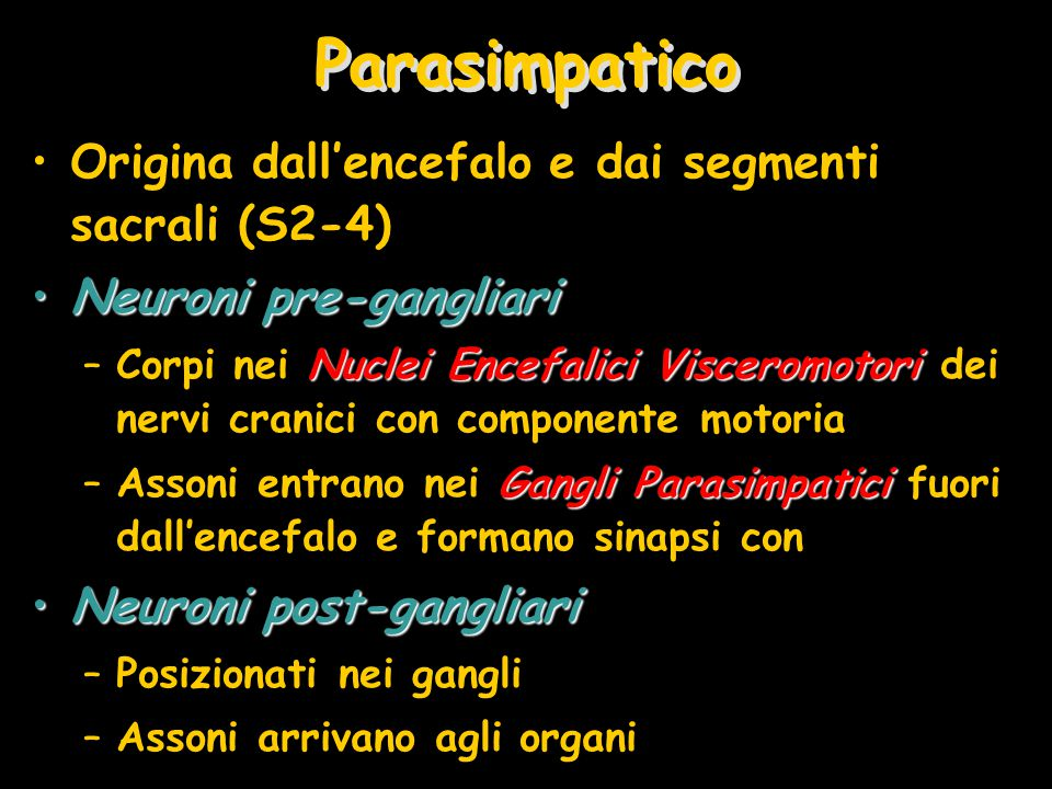 Parasimpatico Origina dall'encefalo e dai segmenti sacrali (S2-4) Neuroni pre-gangliariNeuroni pre-gangliari Nuclei Encefalici Visceromotori –Corpi ne