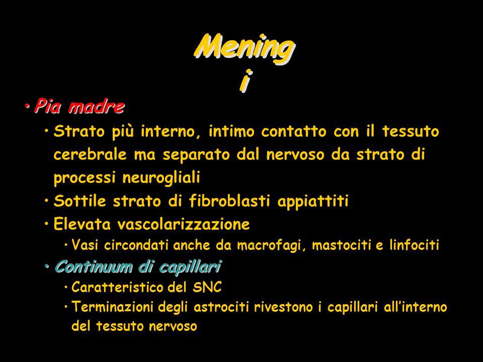 Mening i Pia madrePia madre Strato più interno, intimo contatto con il tessuto cerebrale ma separato dal nervoso da strato di processi neurogliali Sot