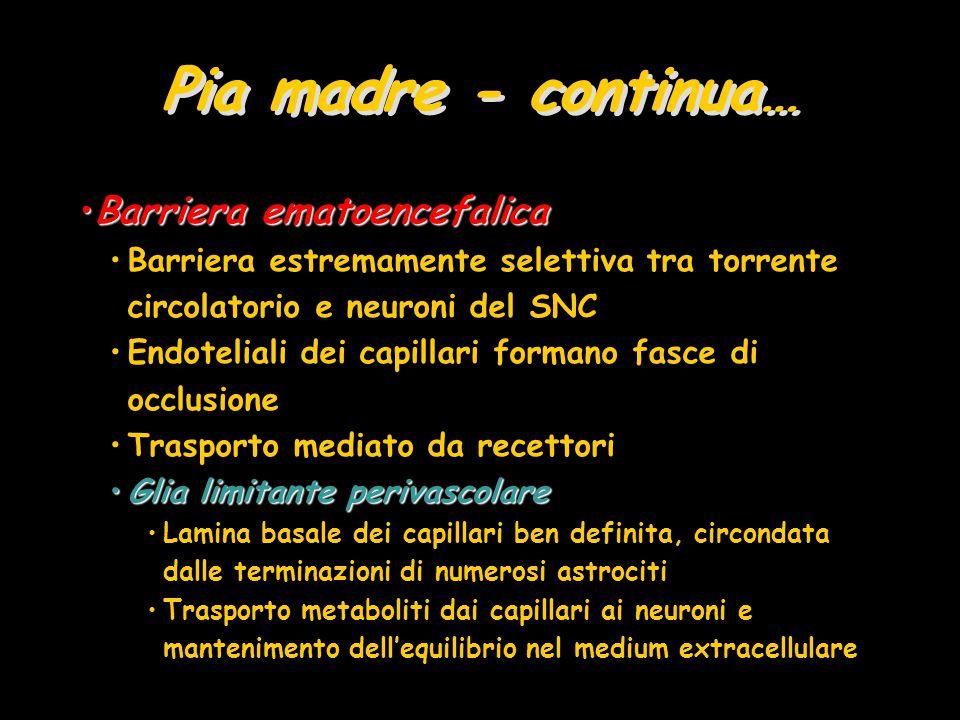 Gangli Autonomi Corpi cellulari motori –Contrazione muscolatura liscia, cardiaca e secrezione ghiandolare Fibre pre-gangliari simpaticheFibre pre-gangliari simpatiche fanno sinapsi con –Gangli simpatici della catena gangliare Vicino al midollo spinale –Gangli collaterali Lungo l'aorta addominale Fibre parasimpatiche pre-gangliariFibre parasimpatiche pre-gangliari Gangli terminali –Prendono contatto con Gangli terminali Fibre parasimpatiche post-gangliariFibre parasimpatiche post-gangliari –Trigemino –Trigemino o innervano direttamente gli organi