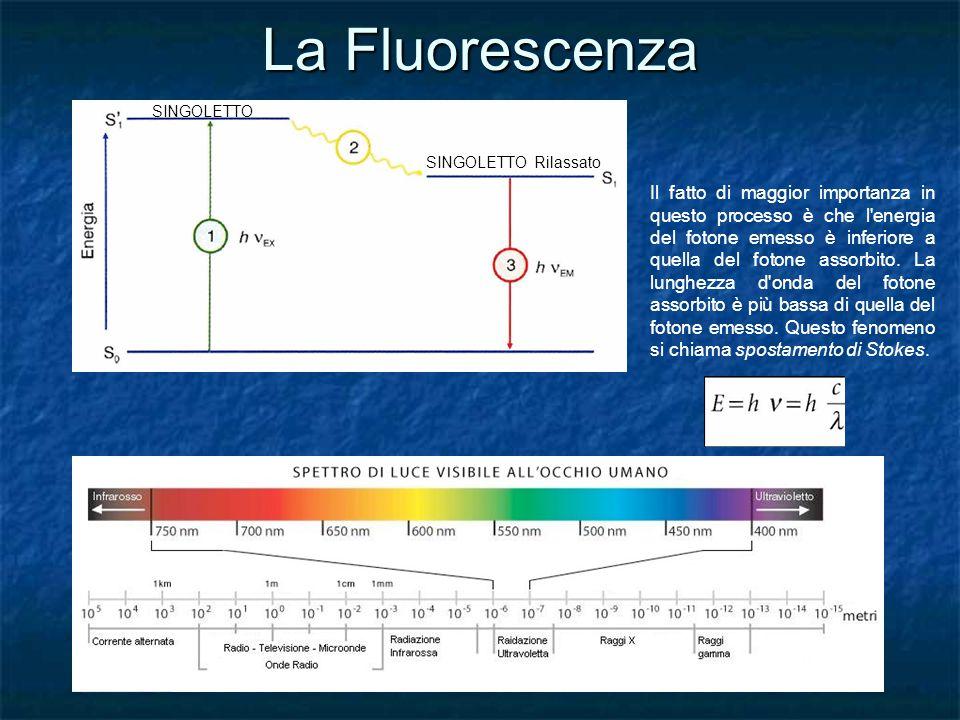La Fluorescenza SINGOLETTO SINGOLETTO Rilassato Il fatto di maggior importanza in questo processo è che l'energia del fotone emesso è inferiore a quel