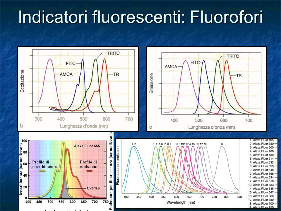 Indicatori fluorescenti: Fluorofori