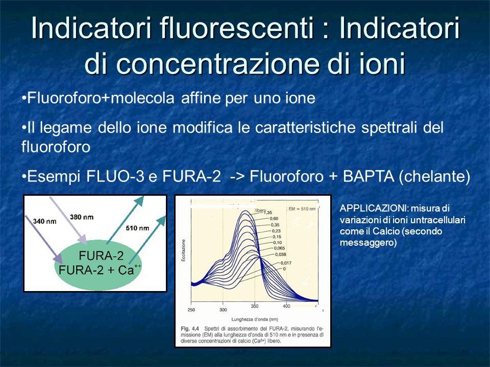 Indicatori fluorescenti : Indicatori di concentrazione di ioni Fluoroforo+molecola affine per uno ione Il legame dello ione modifica le caratteristich