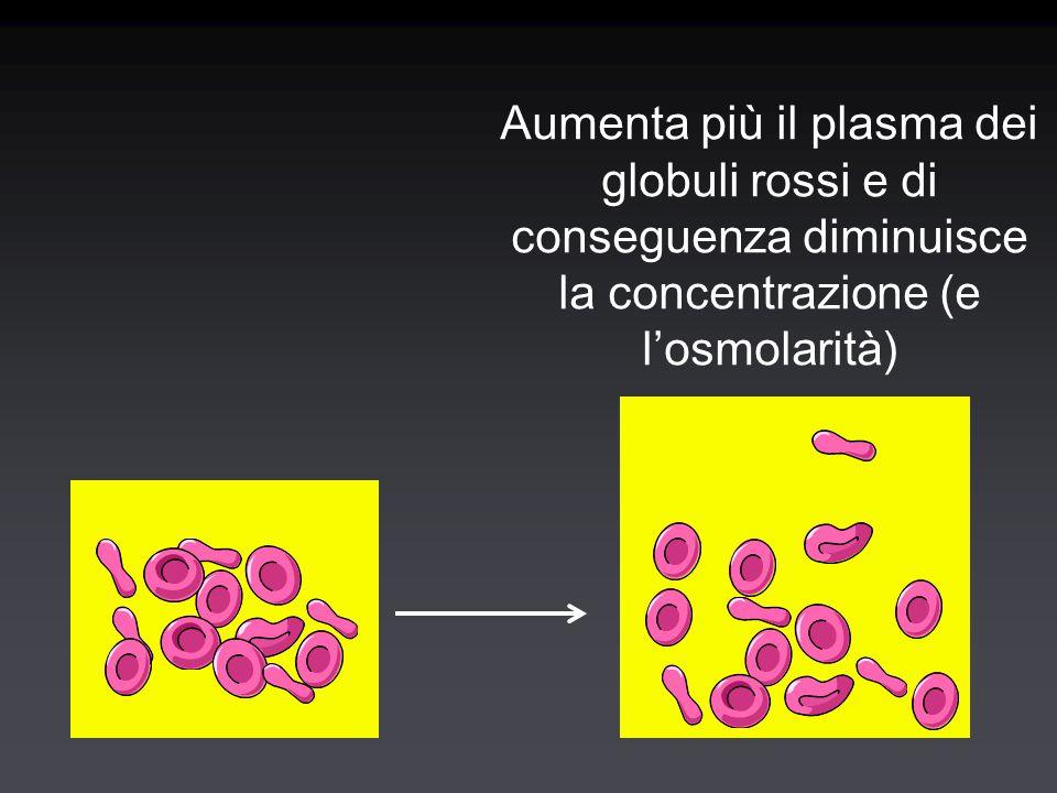 Aumenta più il plasma dei globuli rossi e di conseguenza diminuisce la concentrazione (e l'osmolarità)