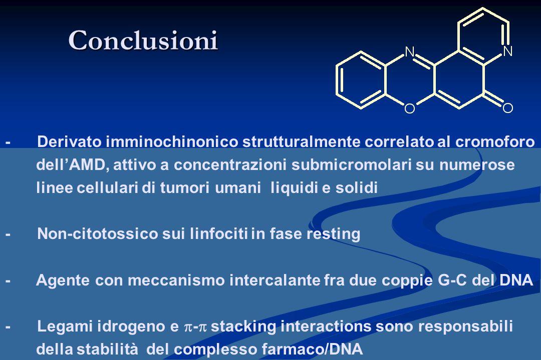 Conclusioni - Derivato imminochinonico strutturalmente correlato al cromoforo dell'AMD, attivo a concentrazioni submicromolari su numerose linee cellu