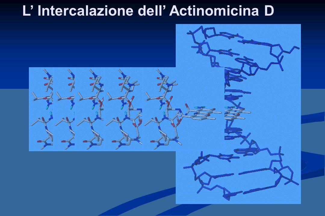 Complesso tra PPH e [d(GAAGCTTC)] 2 A pH fisiologico l'azoto piridinico è protonato e forma legami idrogeno con:  O4' del desossiribosio di C5;  O5' del fosfato tra G4 e C5;  O1 del fosfato di C5