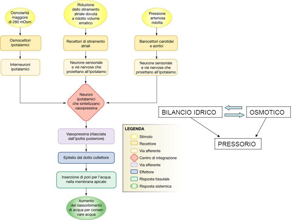 BILANCIO IDRICOOSMOTICO PRESSORIO