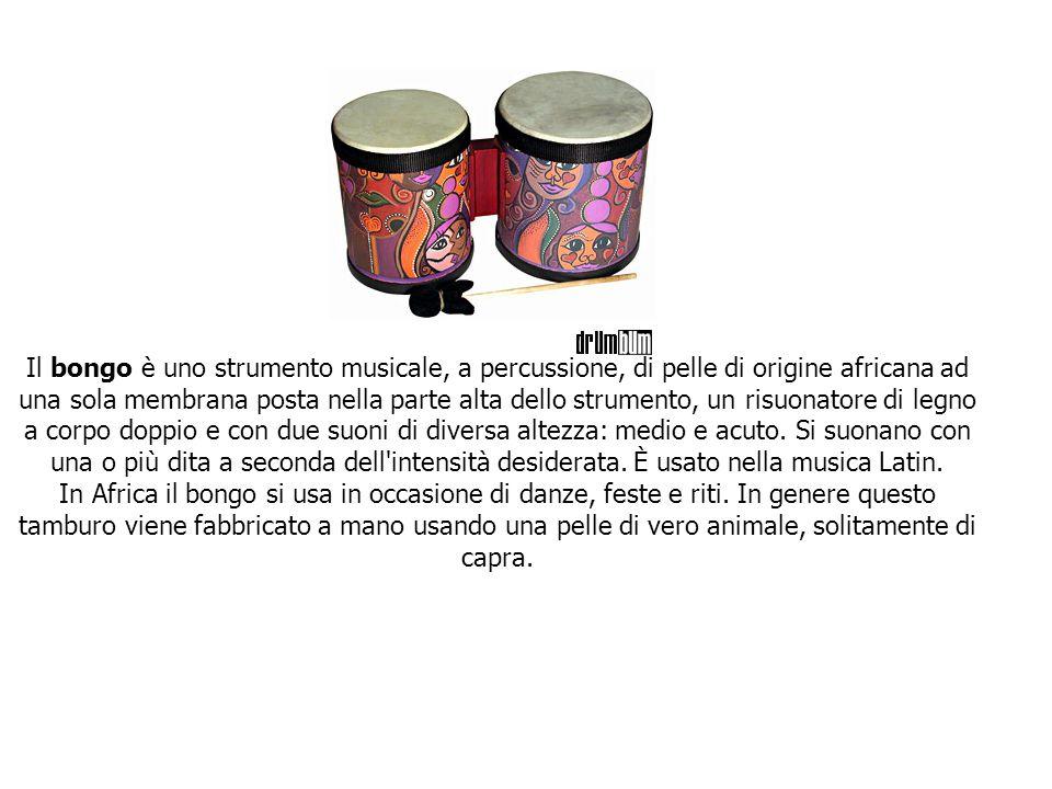 Il bongo è uno strumento musicale, a percussione, di pelle di origine africana ad una sola membrana posta nella parte alta dello strumento, un risuonatore di legno a corpo doppio e con due suoni di diversa altezza: medio e acuto.