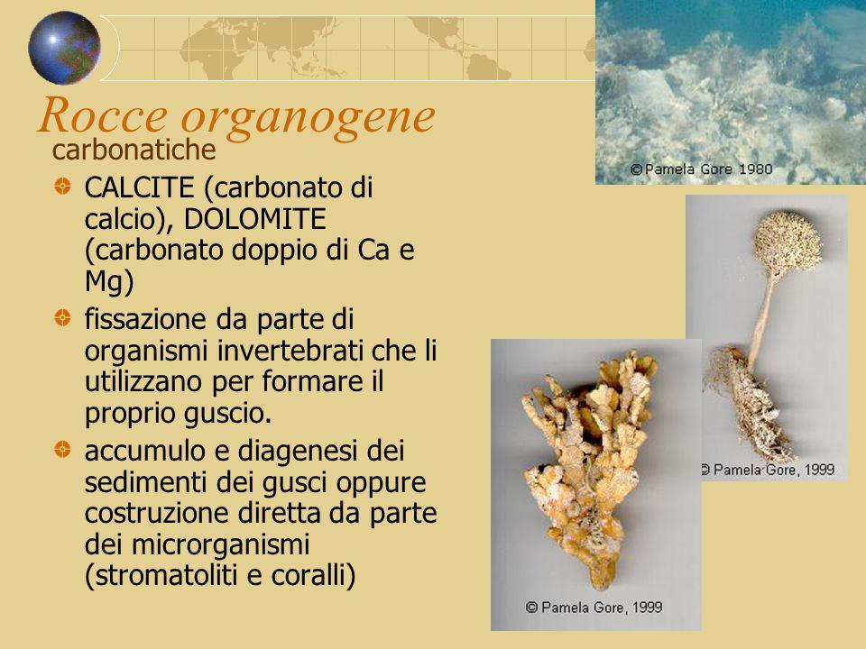 Rocce organogene carbonatiche CALCITE (carbonato di calcio), DOLOMITE (carbonato doppio di Ca e Mg) fissazione da parte di organismi invertebrati che