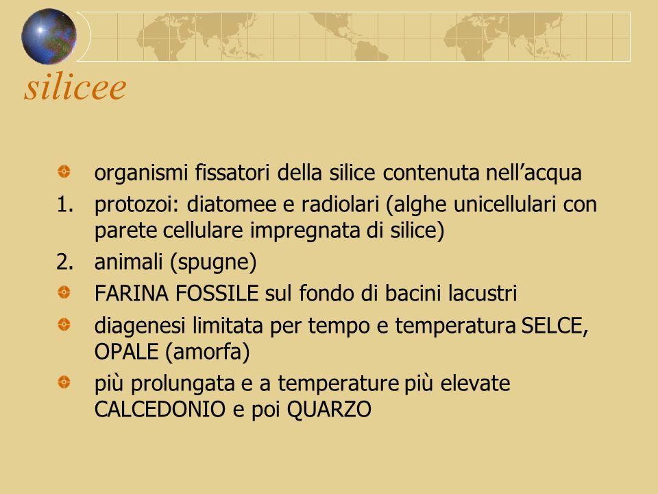 silicee organismi fissatori della silice contenuta nell'acqua 1.protozoi: diatomee e radiolari (alghe unicellulari con parete cellulare impregnata di